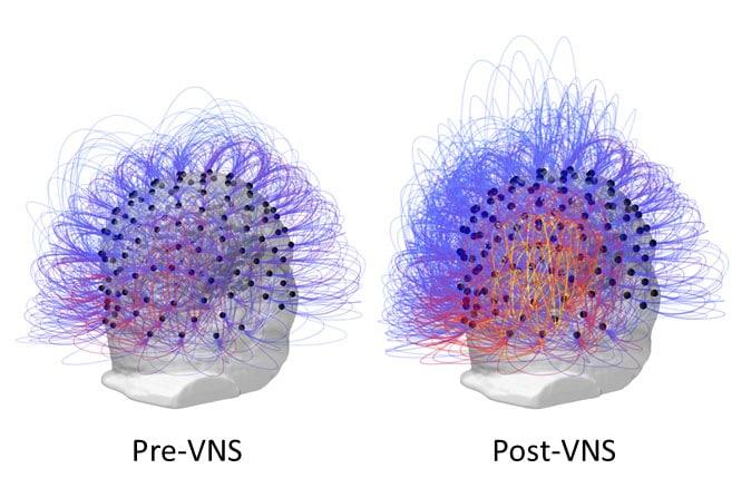 Image credit: Corazzol et al.